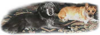 All Good Dogs Go To Heaven: Simone & Buddy