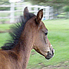Celebrating Our Pets - Horse Pet Stories - Cute foal with legs too long!
