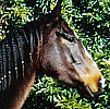 Celebrating Our Pets - Pony Pet Stories - A thoroughbred horse named Lilly